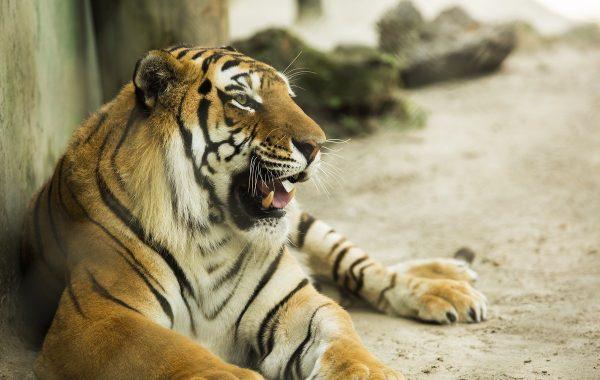 Zoológico Santur